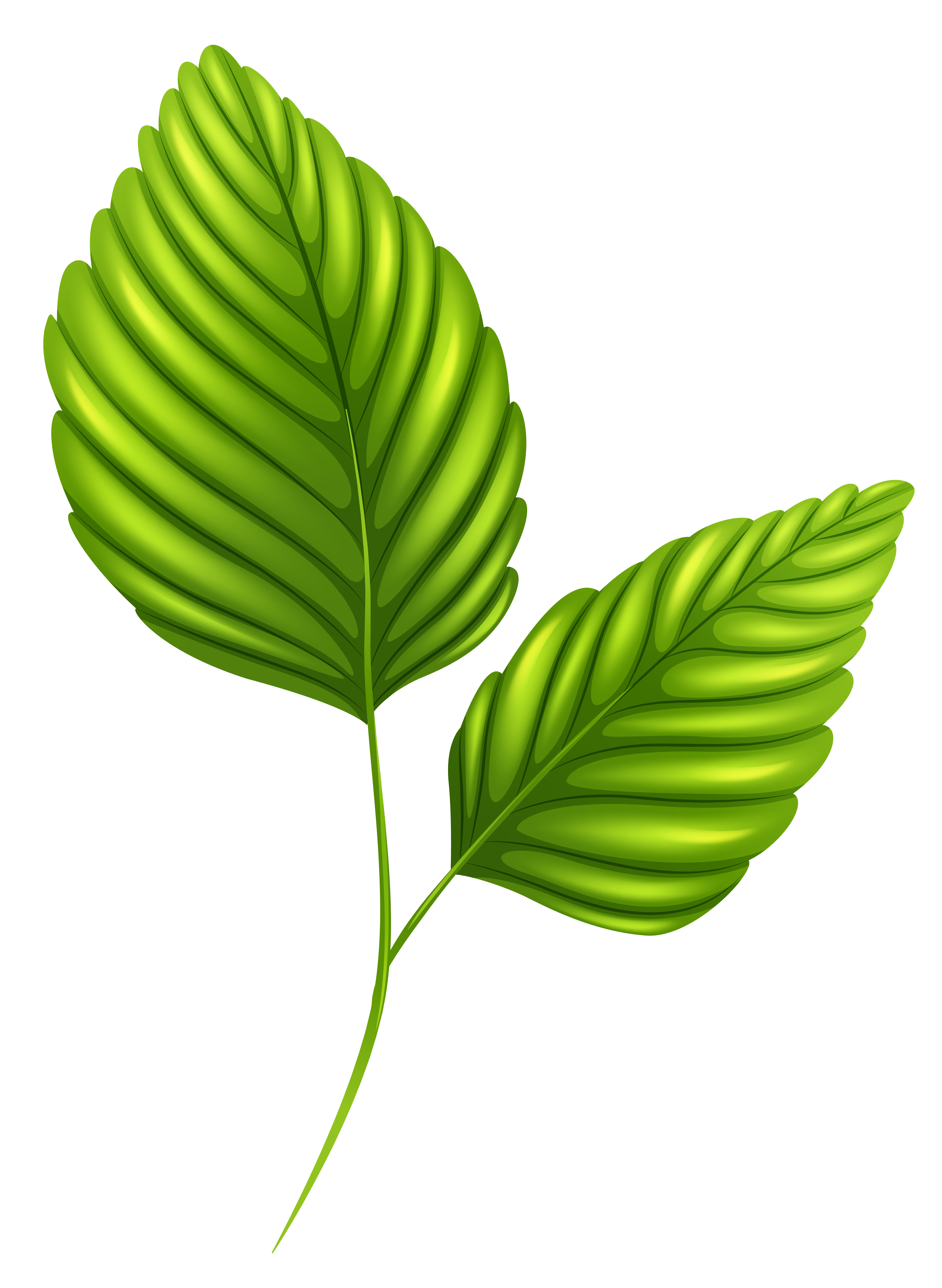 svg free Two green png image. Leaves clipart one leaf.