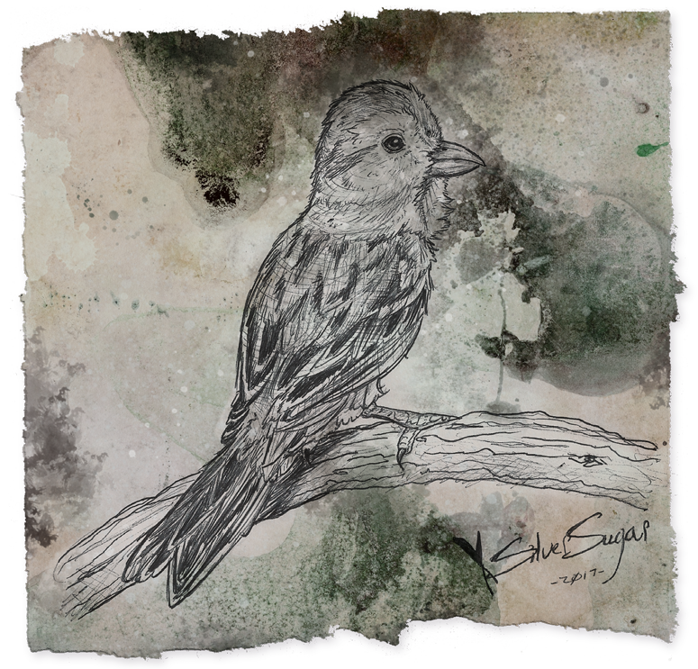 clipart black and white library Drawing reflections pencil. Pen sparrow by silversugar