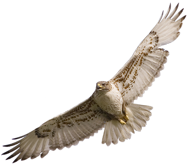 picture free stock 3 clipart war hawks. Image a cbc d