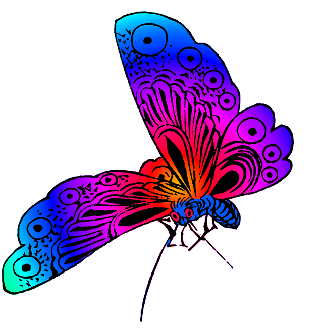 freeuse 5 clipart colored butterfly. Beautiful images