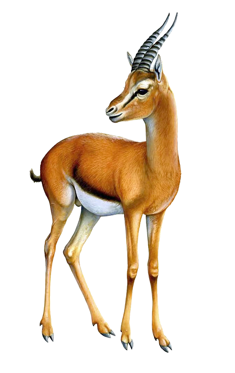 image royalty free download Gazelle cute free on. 50s clipart impala