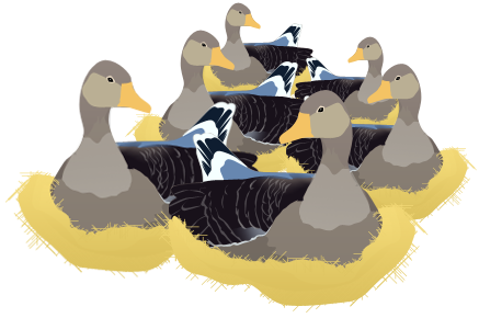 clip art free  days of christmas. 6 clipart geese a laying