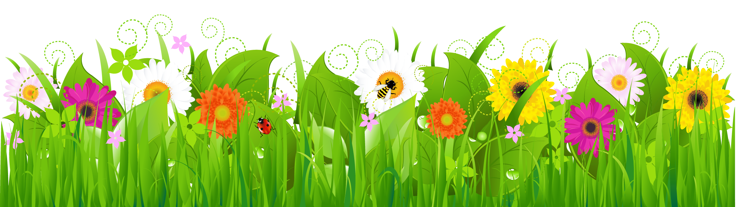 graphic transparent Daisies high frames illustrations. A clipart grass