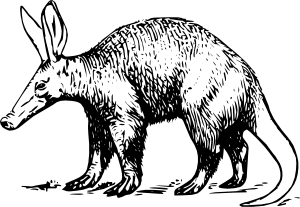 freeuse download Aardvark drawing cute. Animal reports pinterest draw