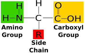 clipart free stock What Are Amino Acids