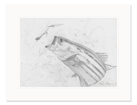 banner free Community drawing pencil. Jellyfish study original sketch