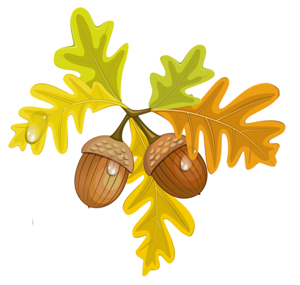 clip black and white Acorn clipart. Transparent fall leaves with.