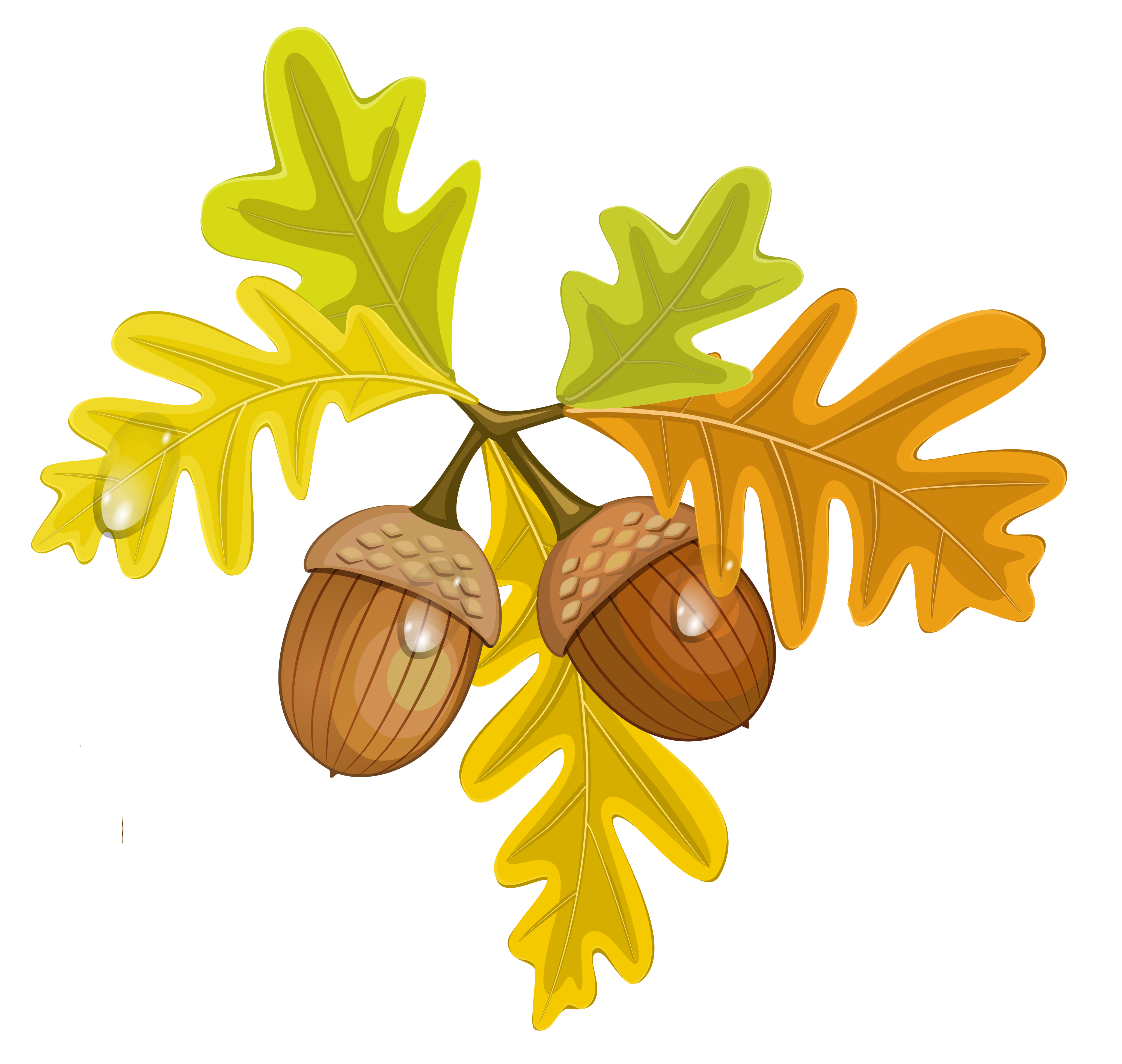 free library Acorn clipart church. Transparent fall leaves with