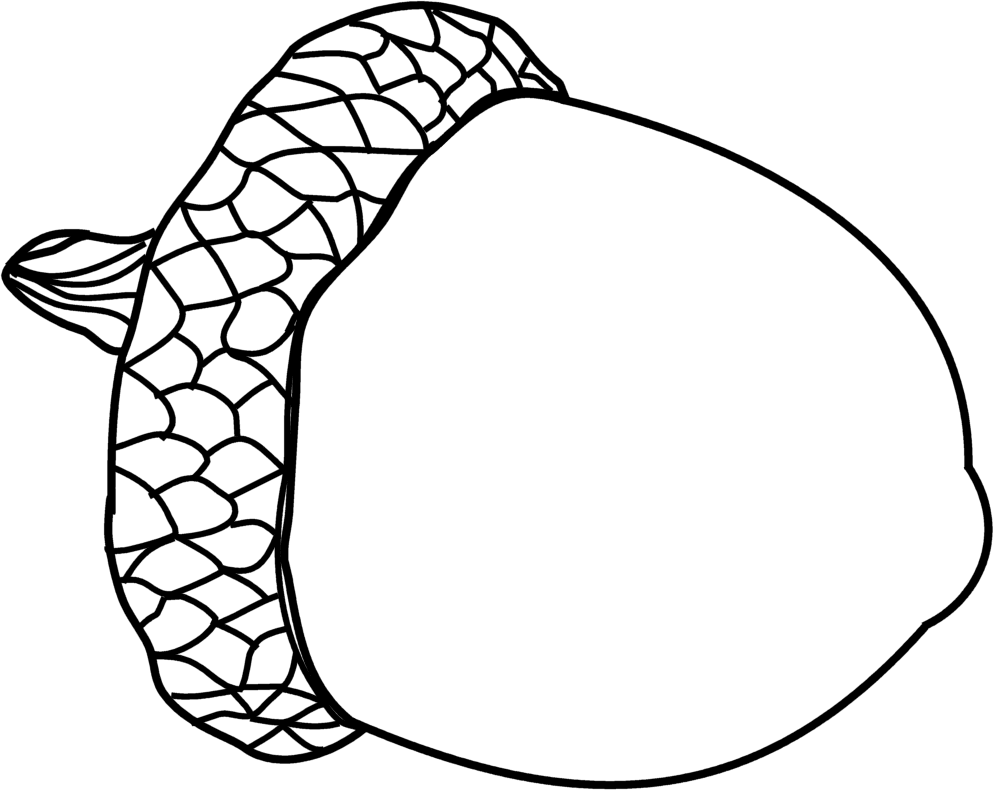 graphic royalty free stock Acorn Drawing at GetDrawings