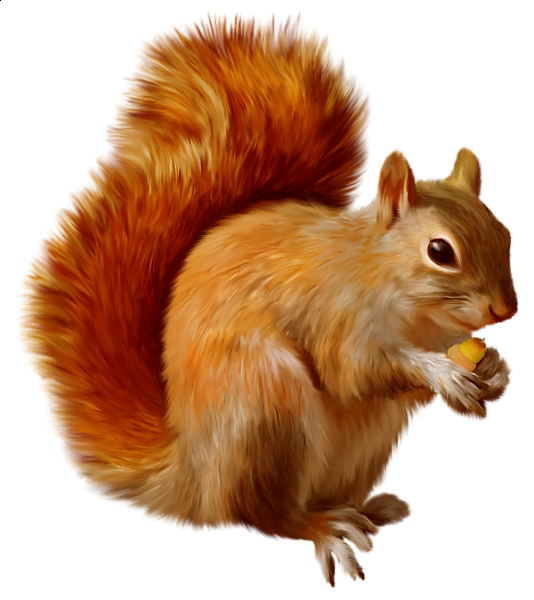 picture stock Acorn clipart fox squirrel. The hardest english words