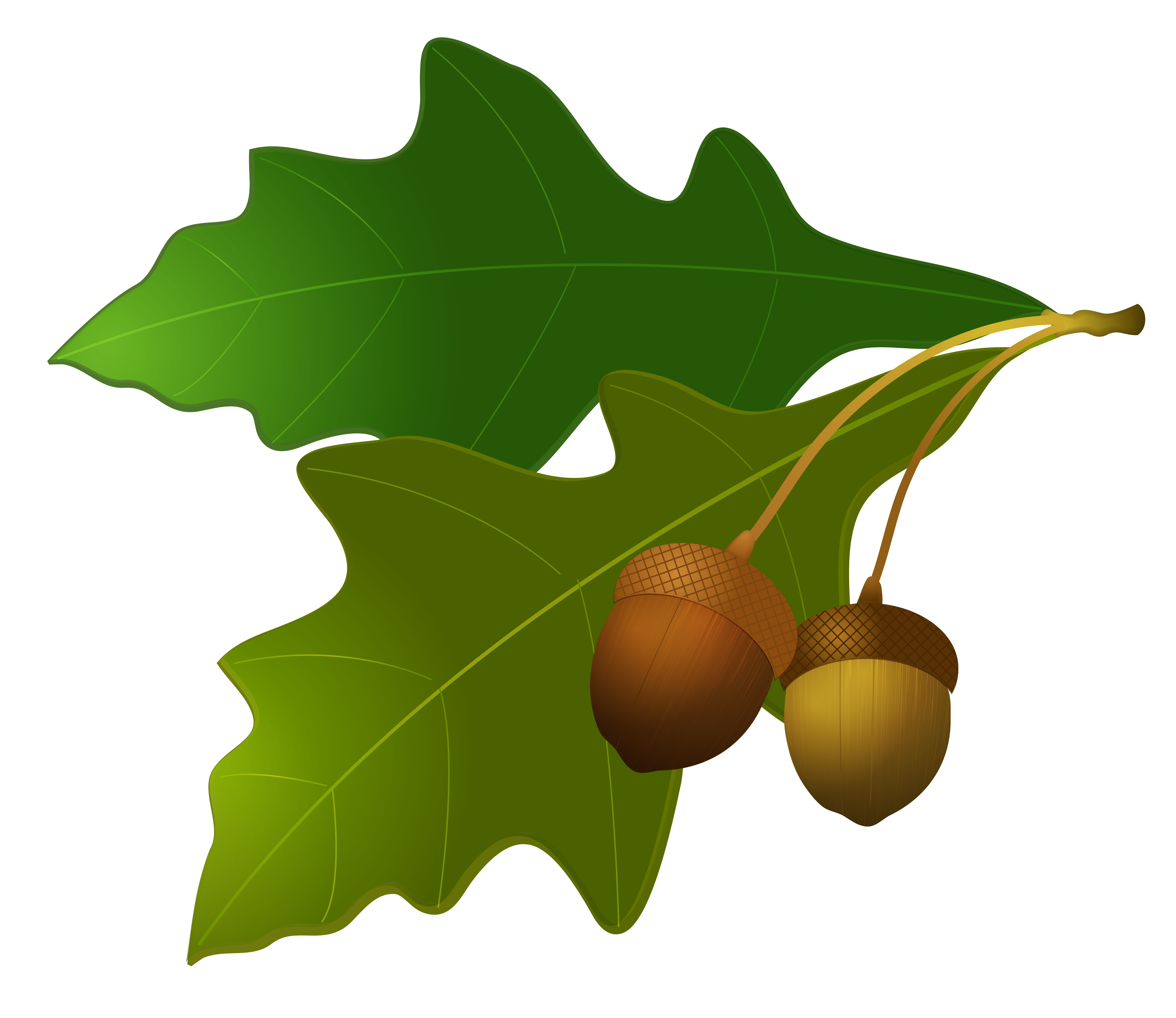 banner freeuse download Acorn clipart leaf. Leaves with acorns gallery
