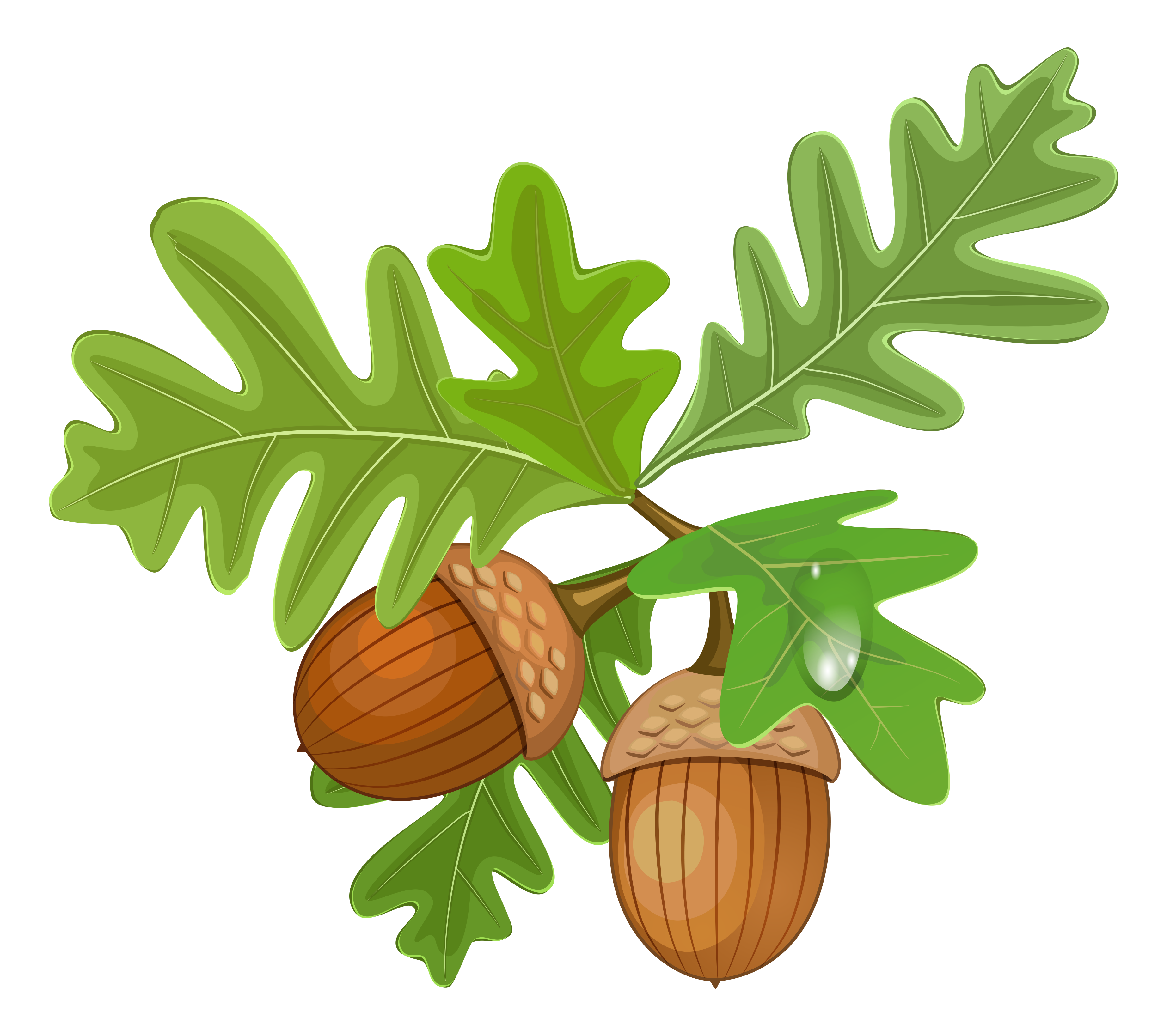 clipart royalty free library Oak free on dumielauxepices. Acorn clipart leaf
