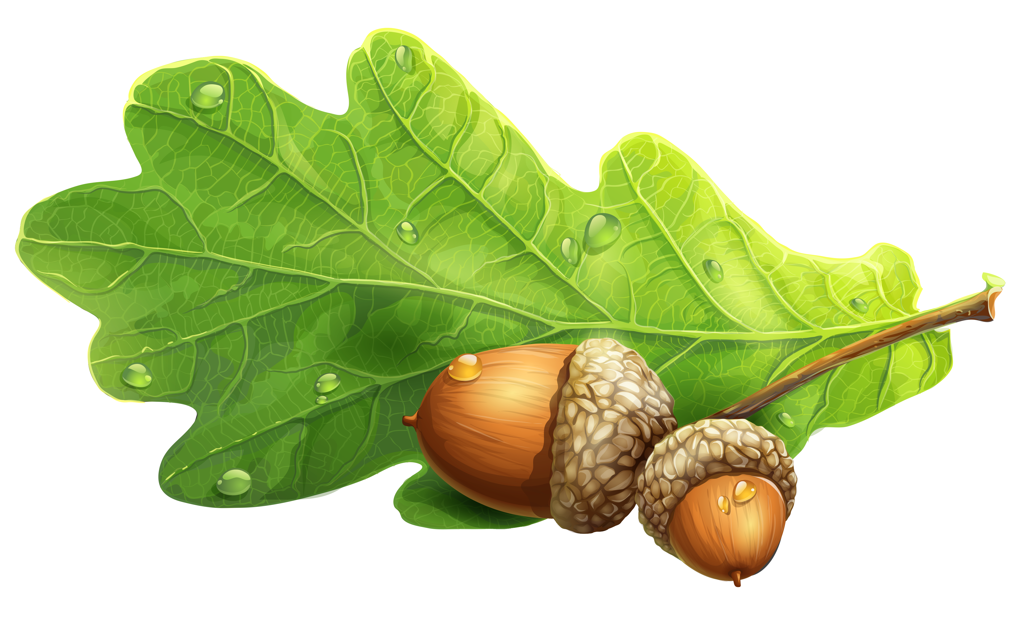 graphic free stock Free on dumielauxepices net. Acorn clipart painting.