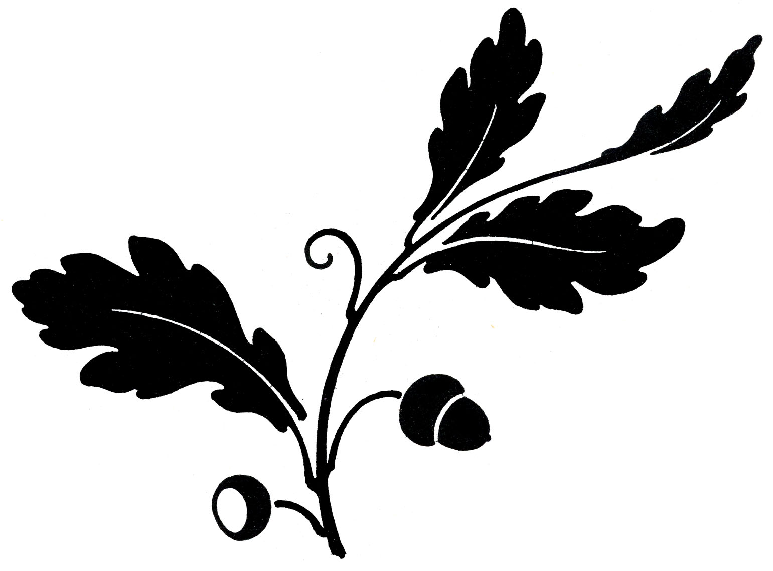 clip transparent library Acorn leaf clipart.  oak images with