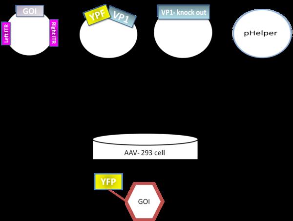 banner free library adenoviral vector adeno associated viral #109433770