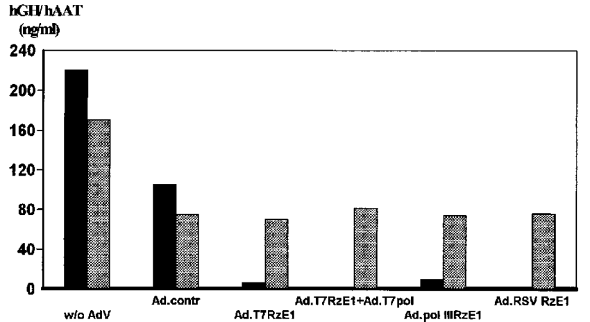 png transparent Effects of different adenoviruses expressing hGH RzE