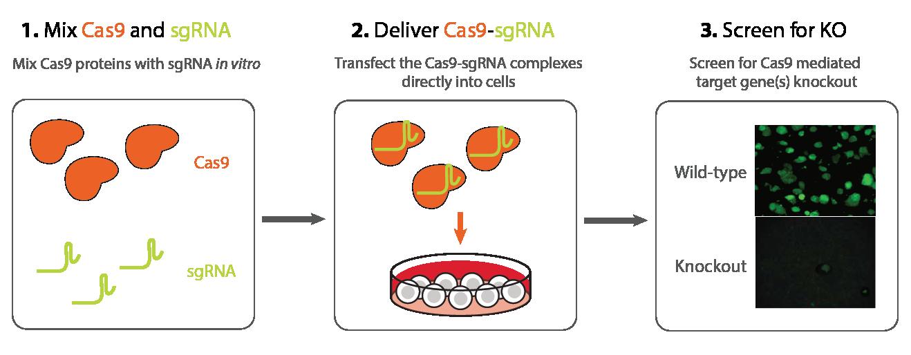 clipart freeuse library CRISPR Cas