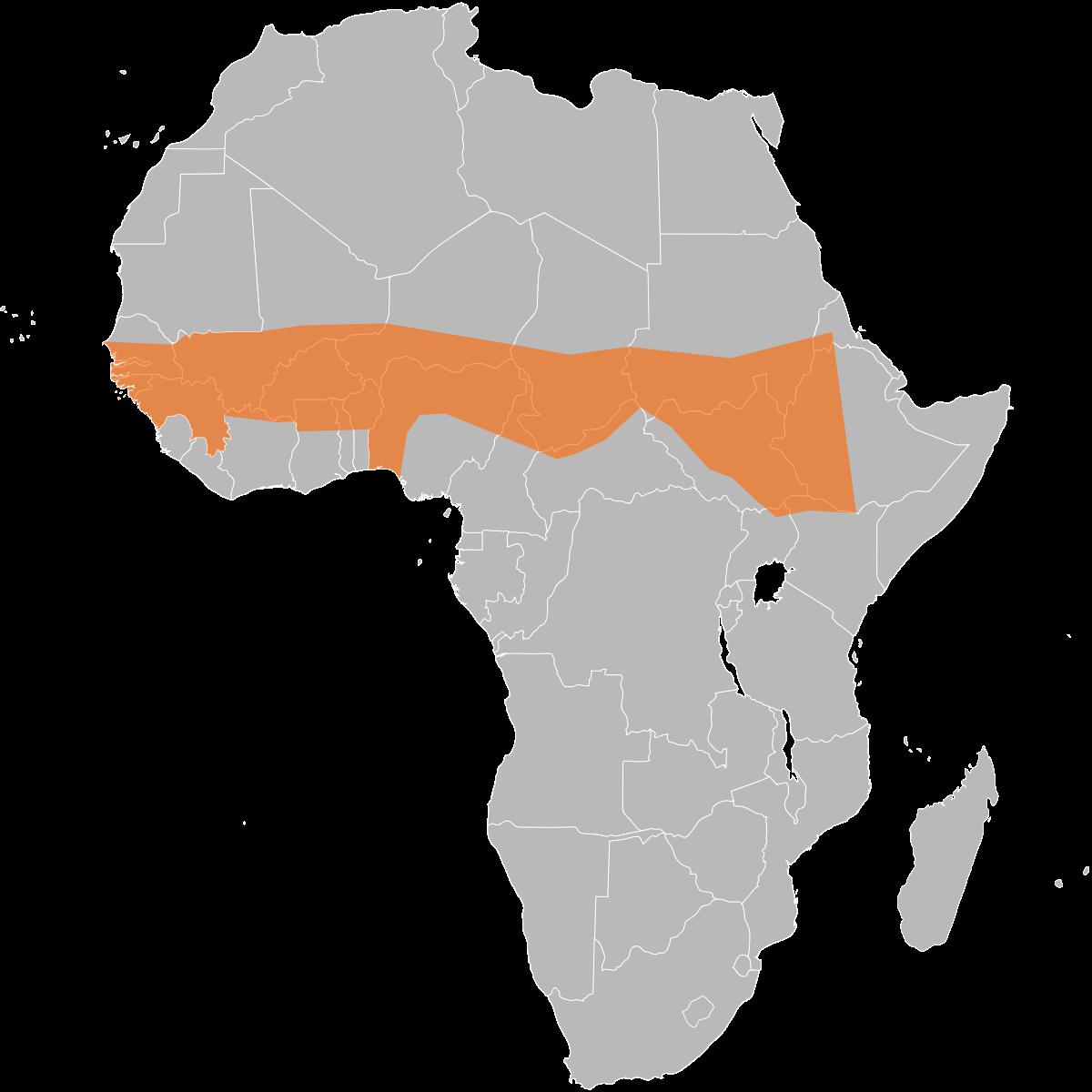 graphic African meningitis belt