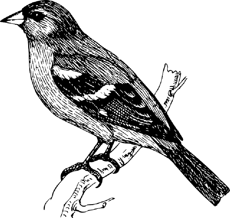 graphic royalty free download Collection of free Branch drawing bird