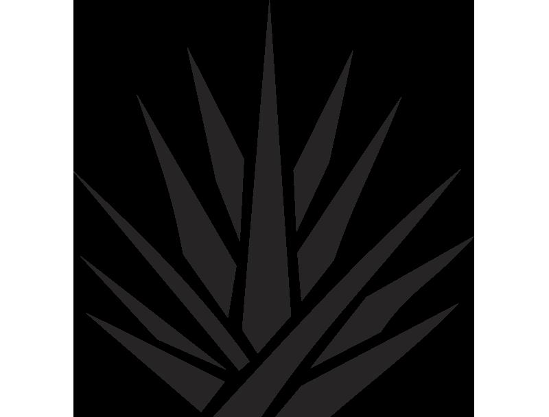 banner transparent Agave PNG Transparent Agave