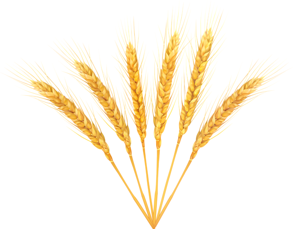 svg stock Collection of free Grained clipart wheat background
