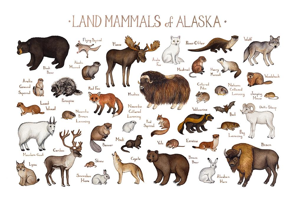picture library stock Land mammals field guide. Alaska clipart mammal.
