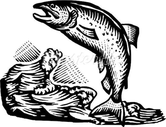 graphic stock Alaska clipart salmon fish. Transparent .