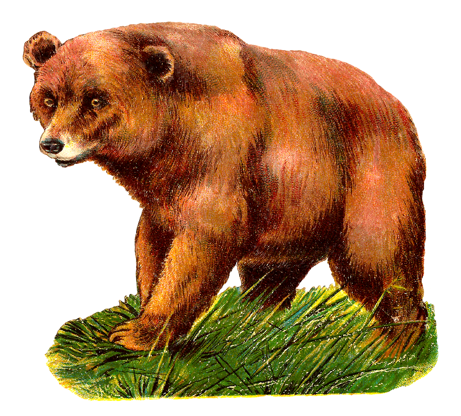 image free library Grizzly bear Alaska Peninsula brown bear Clip art