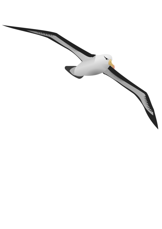 clip art freeuse download Albatross drawing. Seabird computer icons free