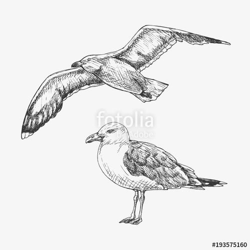 banner transparent download Seagulls drawing hand drawn. Seagull marine bird vector.
