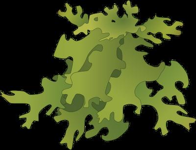 vector black and white stock Protista kingdom copy on. Algae clipart.