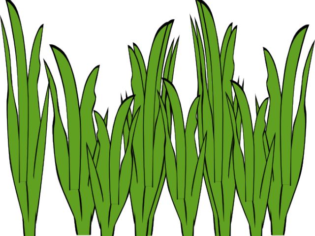 image library Algae clipart. Free on dumielauxepices net