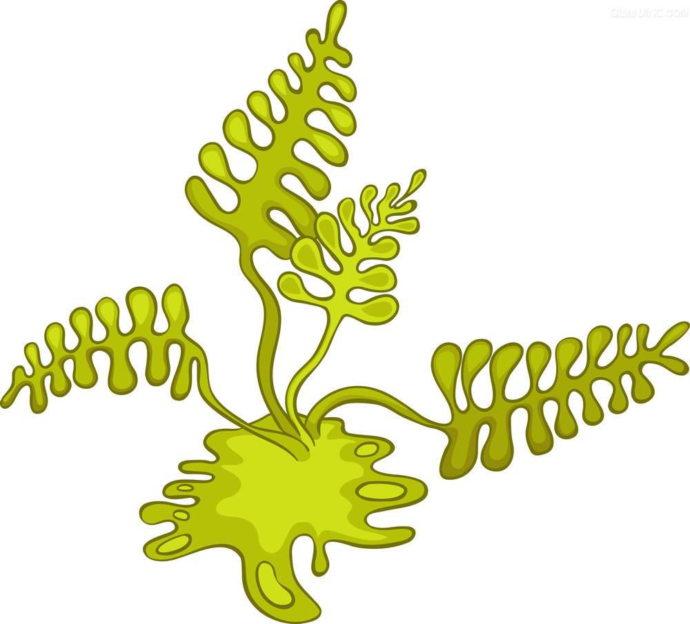 png freeuse download Algae clipart algea. Cartoon photography clip art.