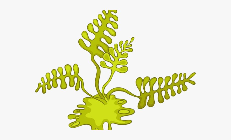free library Algae clipart algea. Cartoon cliparts free .