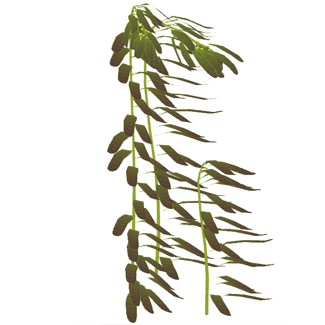 banner transparent stock Sea Kelp PNG Transparent Sea Kelp