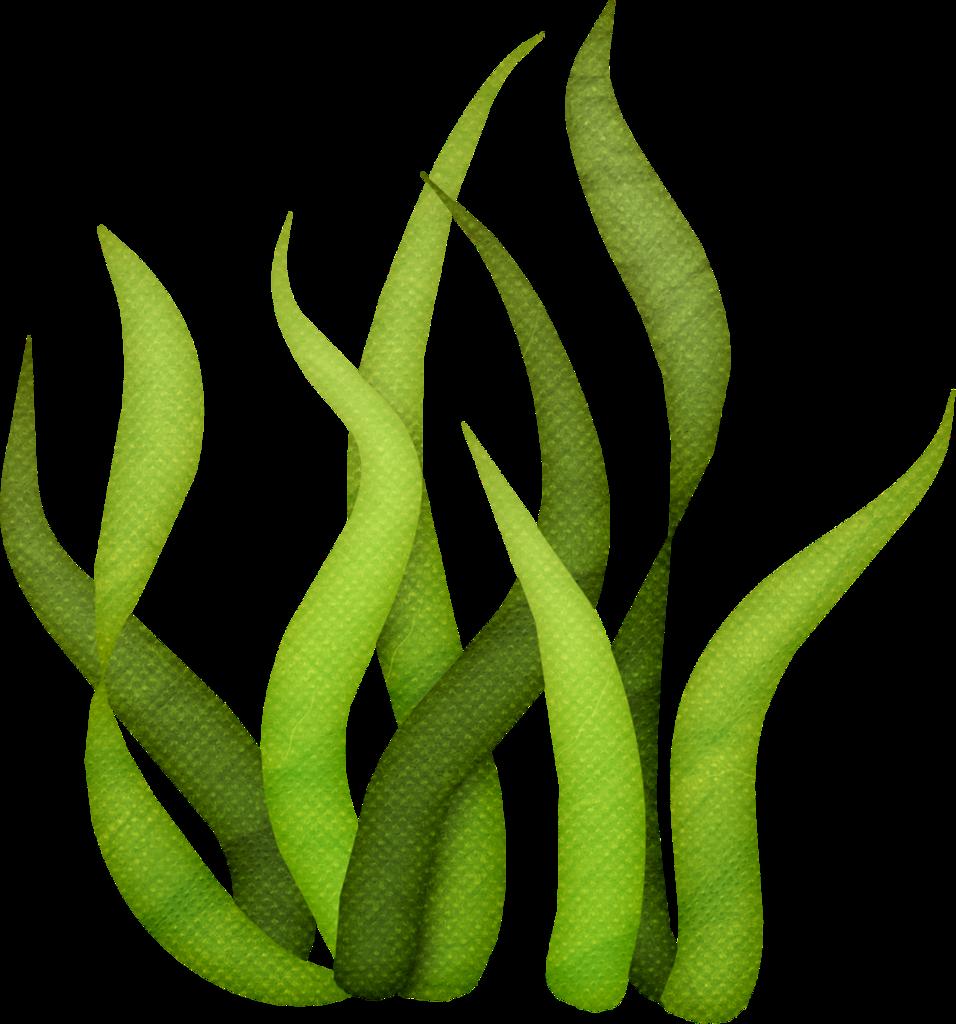 vector free Algae clipart giant kelp. Lliella bk underwater seaweeds.