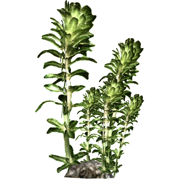 vector free library Sea png transparent images. Algae clipart giant kelp.