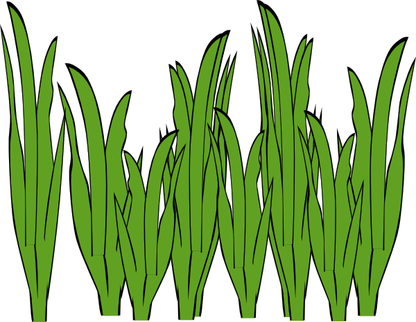 clipart black and white library Algae Clipart elephant grass