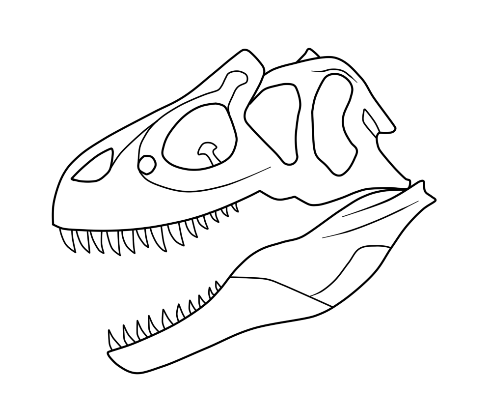 image free allosaurus skull drawing