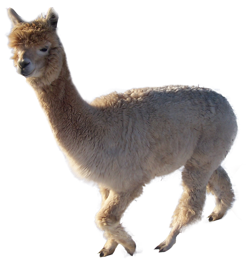 svg royalty free download Transparent free on dumielauxepices. Alpaca clipart