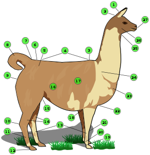 jpg freeuse Wikipedia names of body. Llama clipart animal american.