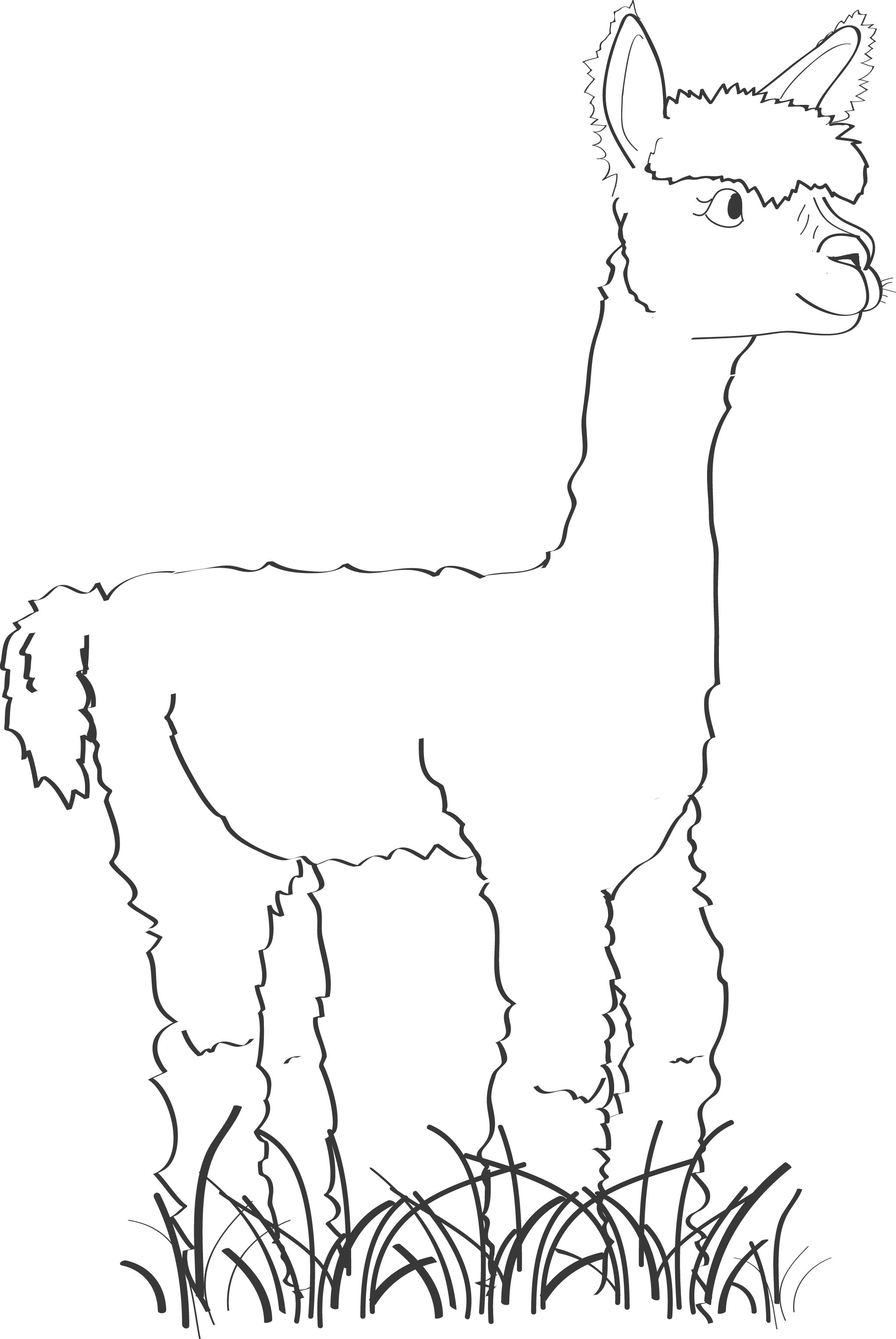 svg library stock Alpaca Line Drawing at GetDrawings