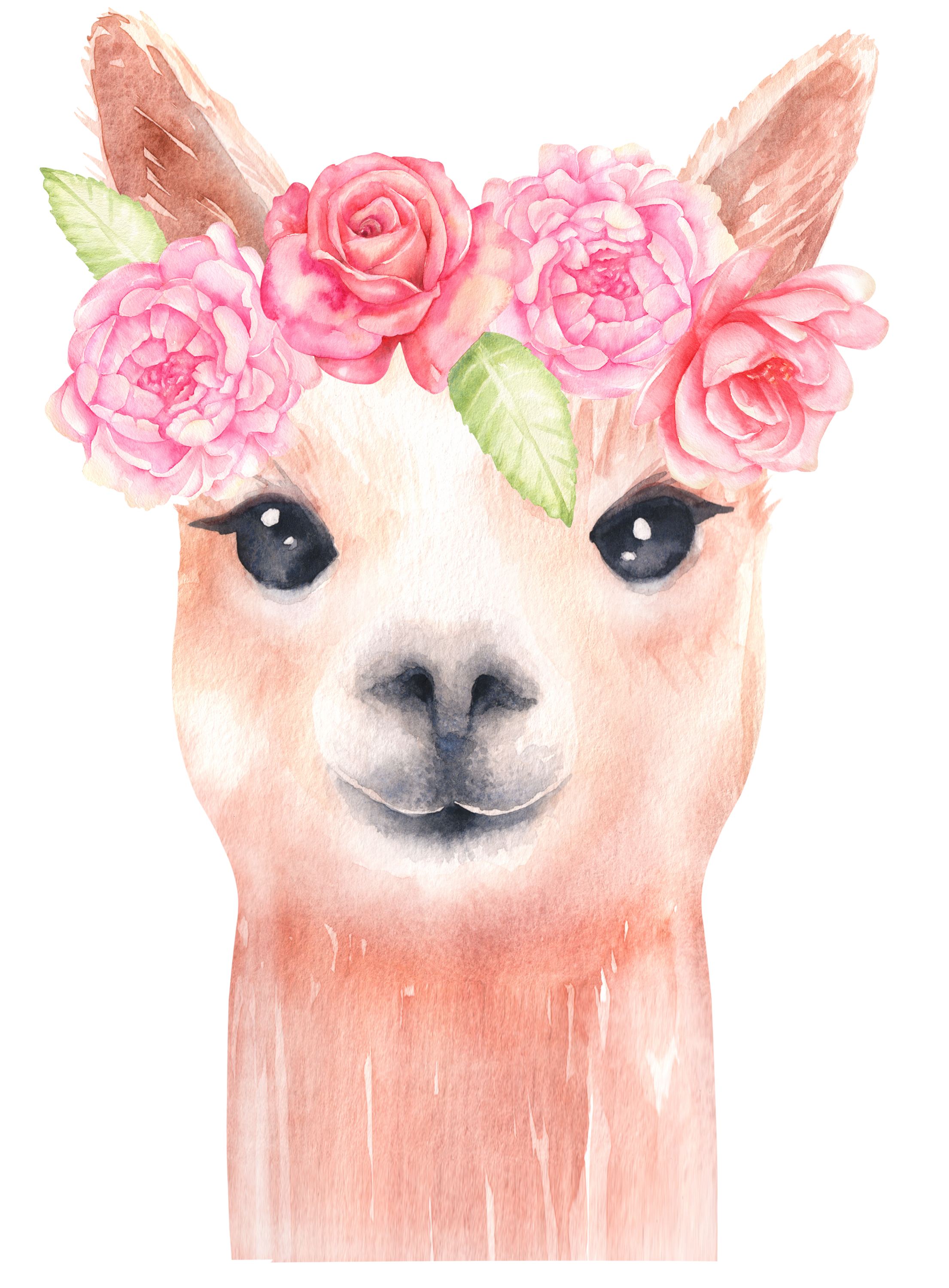 vector free stock Llama clipart graphics alpaca. Drawing stitch watercolor