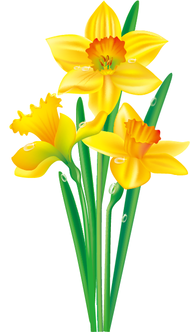 clipart transparent stock Daffodil Flower Drawing Clip art