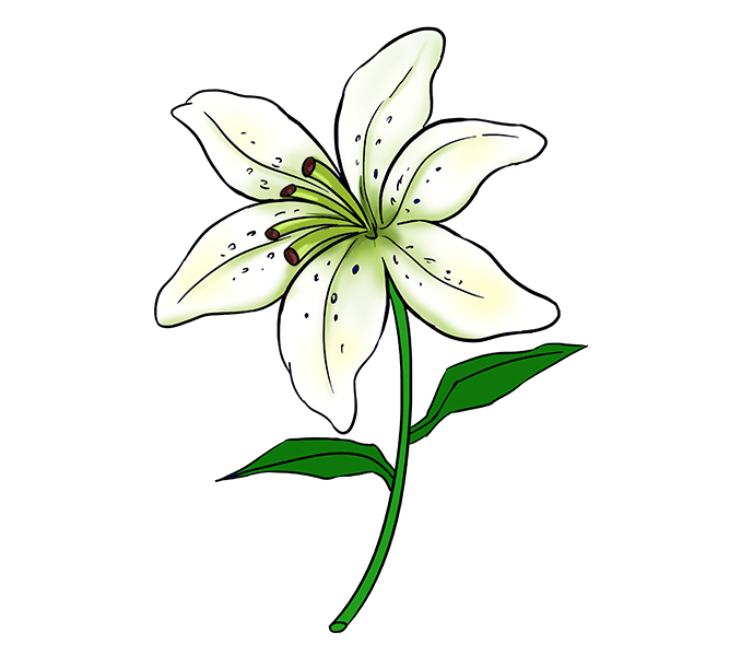 clip library Lilly Flower Drawing at GetDrawings