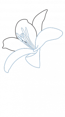image transparent download Lilies Drawing at GetDrawings
