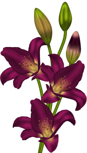 clip download amaryllis drawing purple lily flower #88901125