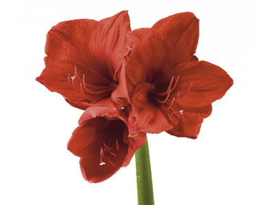 clip art free Flower Meanings