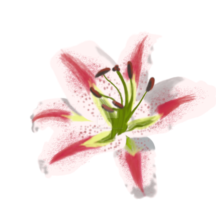 transparent stock Oriental painting practice by. Amaryllis drawing stargazer lily