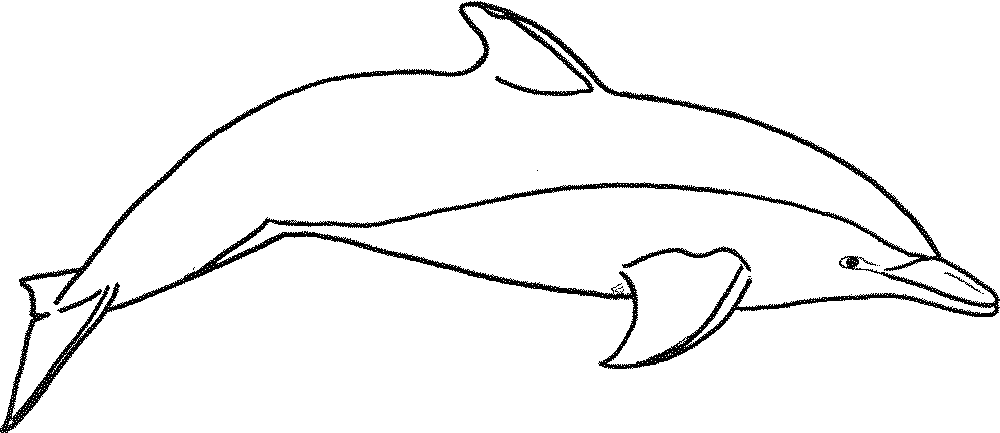 clipart royalty free stock drawing dolphin real #111730166